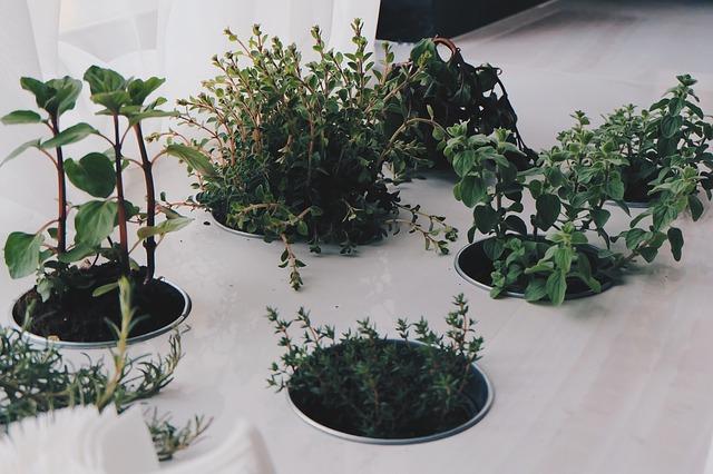 Utilizziamo le erbe aromatiche in Cucina